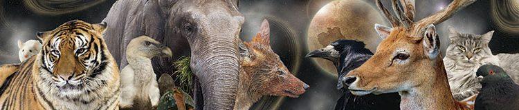 Le chacal et l'éléphant